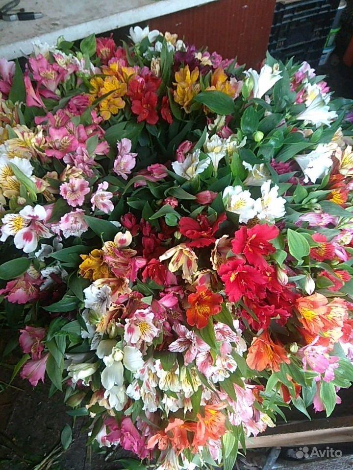 Цветы свежие альстромерия купить на Зозу.ру - фотография № 1
