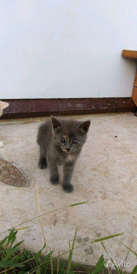 Отдам котят в Анапе - фотография № 6