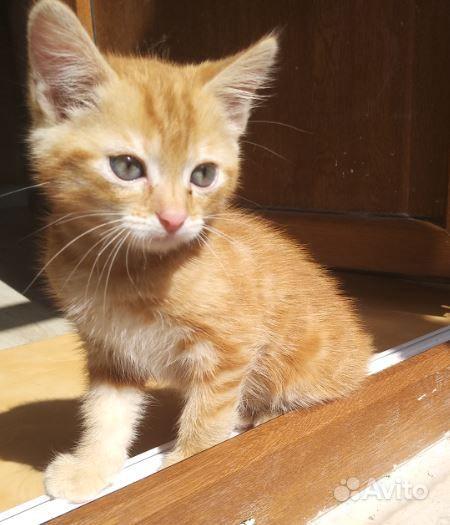 Ласковый котик ищет хозяев