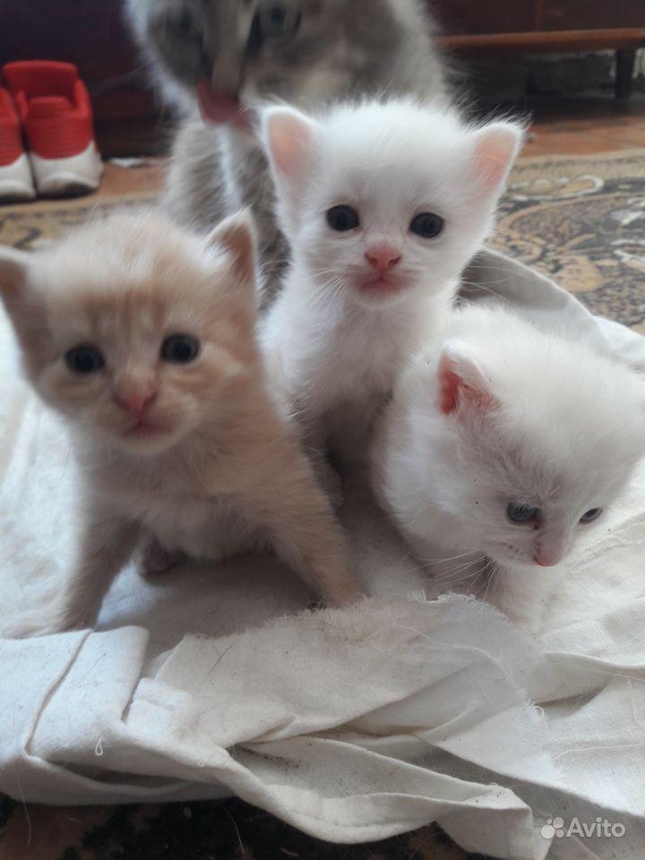 возраст картинки котят три недели люблю