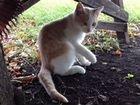 Ласковые котята ждут свою Любимую Хозяйку и Друга