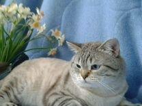 Авито стерлитамак животные кошки в дар дать объявление продам прицеп дачу частные объявления