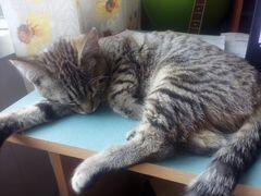 Авито отдам котенка в отличные руки спб на авито