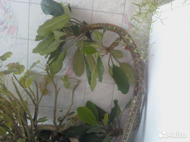 Отдам даром комнатные растения