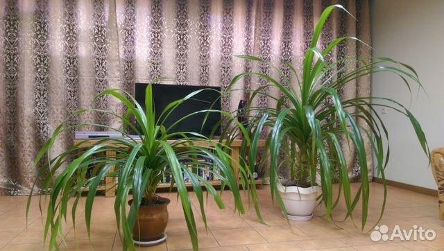 Комнатные цветы авито барнаул