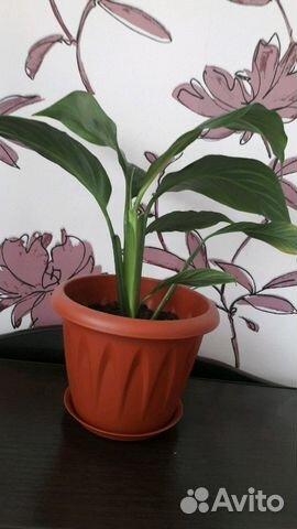 Авито комнатные цветы дзержинск