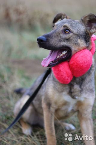 Собака очаровашка Смайл в дар купить на Зозу.ру - фотография № 5