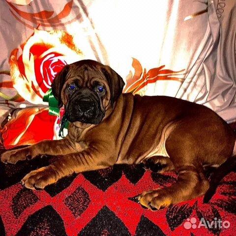 Ми Кюн Доса(Великая собака красоты) (Корейский мас купить на Зозу.ру - фотография № 6