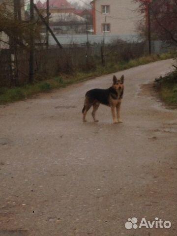 Отдам щенка в добрые руки купить на Зозу.ру - фотография № 7