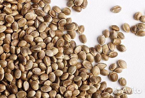Семена конопли в челябинске купить как вредит конопля человеку