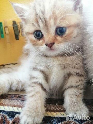 Продам котят  купить 6
