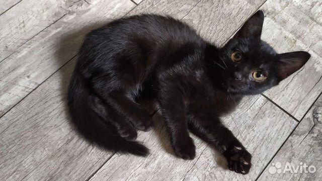 Кошка  89041440204 купить 1