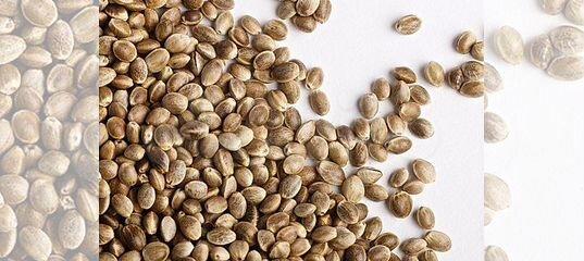 Семена конопляные в челябинске как вырастить семена конопляные в домашних условиях