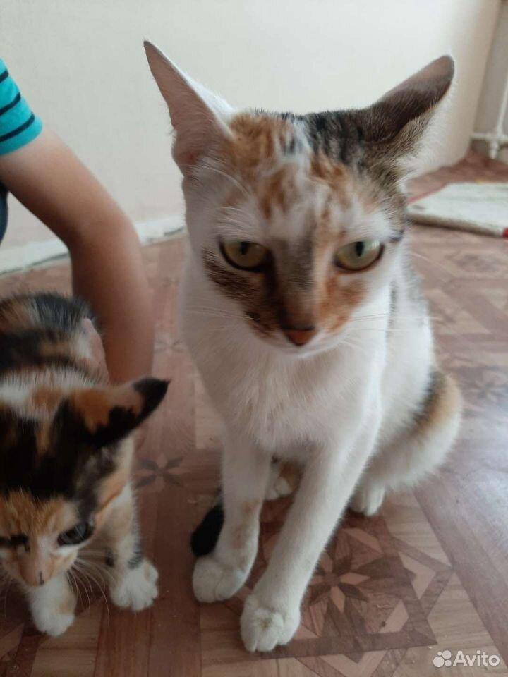 Кошка  89610008181 купить 6