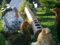 Птица домашняя(курица, утка, гусь, цесарки) яйцо к