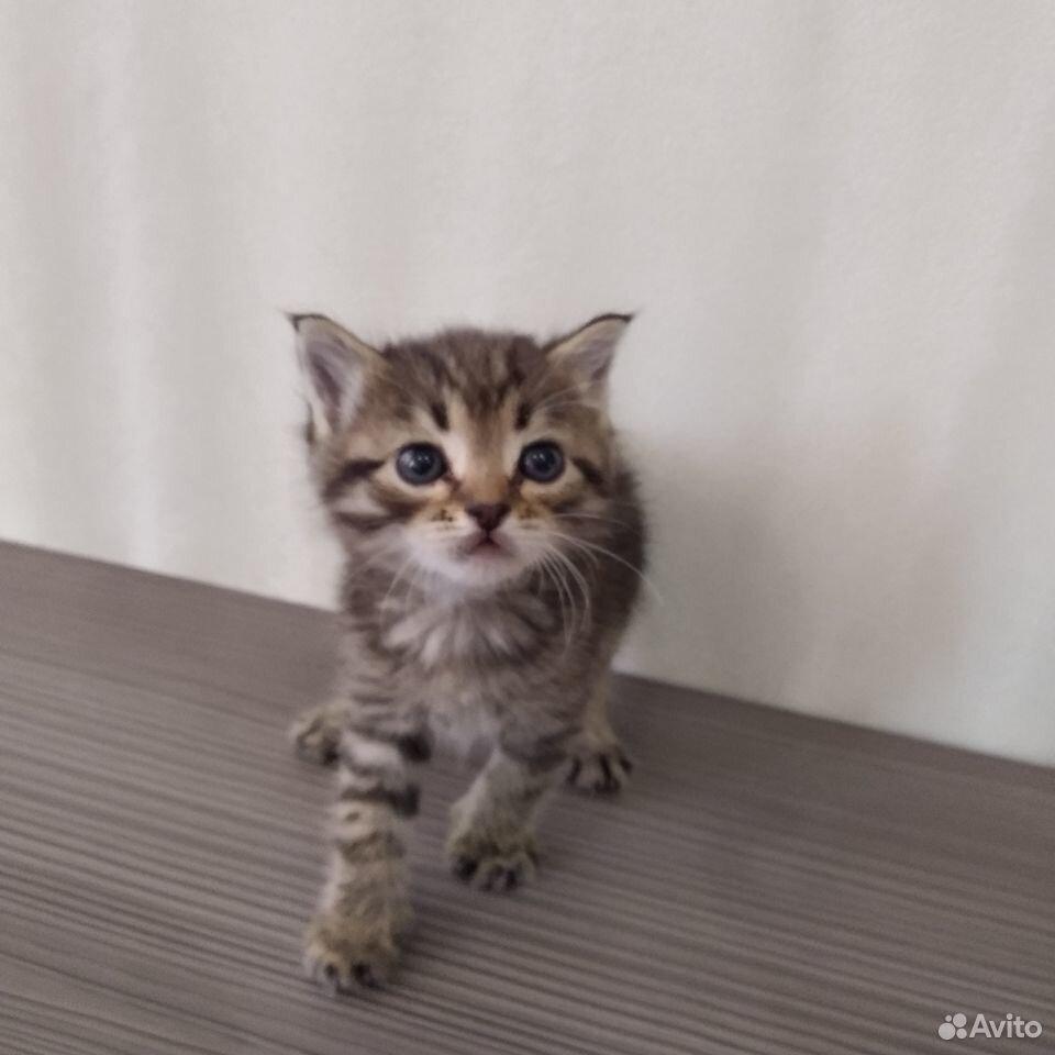 Котенок,мальчик
