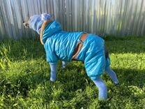 Одежда для небольших собак