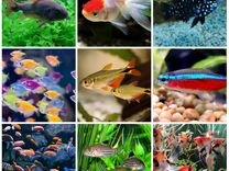 Рыбы в аквариум разные в ас-те