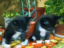 Три месячных котенка в хорошие руки.кошка крысолов