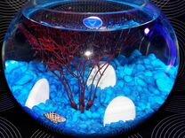 Круглые аквариумы с петушком