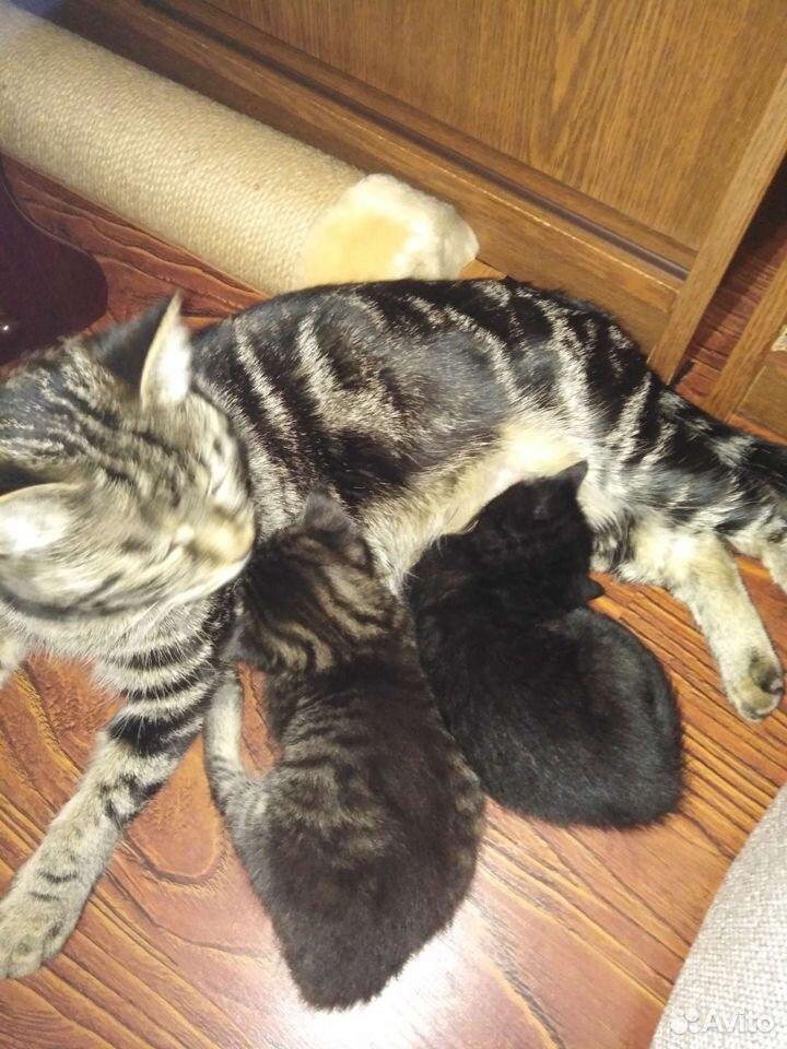 Котята даром  89841611281 купить 4