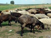 Говядина,Бараны, овцы,яйцо куриное,козел,молоко