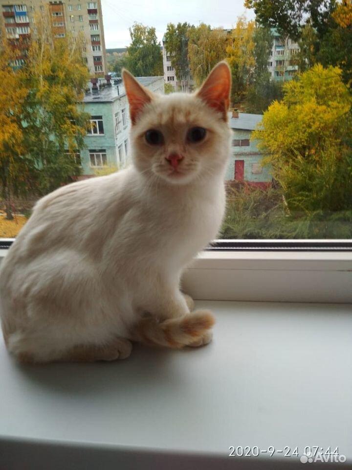 Котик  89059266590 купить 3