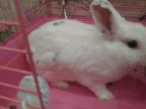 Декоративный кролик 1 год