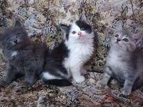 Котята Дворянские