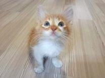 Котята в поисках дома